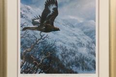 Kongeørn i vinterfjell Giclee-trykk (40x40 cm) kr 3500 mr