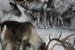Reinsdyr Oljemaleri (120x89 cm) kr 25000 ur