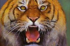 Tiger-blikk Oljemaleri46x38cm 4000,-kr m.r.