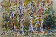 Skog Akvarell (36x48 cm) kr 3000 ur
