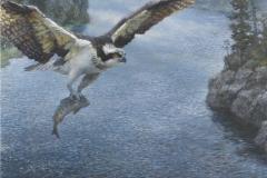 Fiskeorn