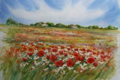 Valmue_eng Akvarell 40x51cm 4500,-u.r.