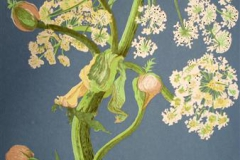 Troemsoepalmen Seriegrafi 63x44,5cm 1800,-kr u.r.