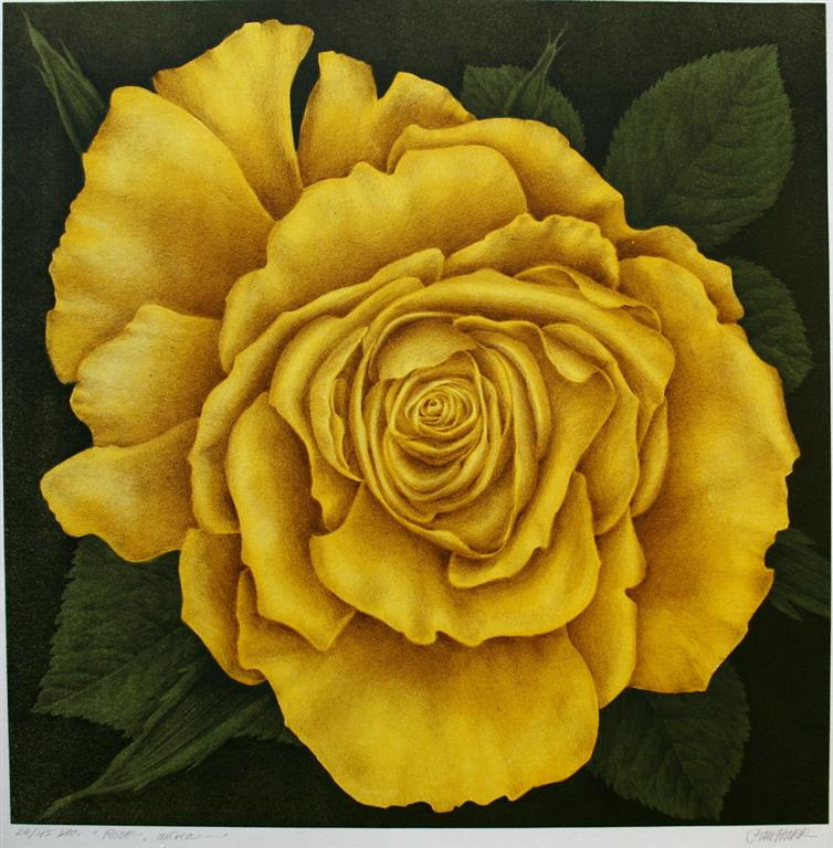 Rose Litografi 50x50 cm 3200 ur