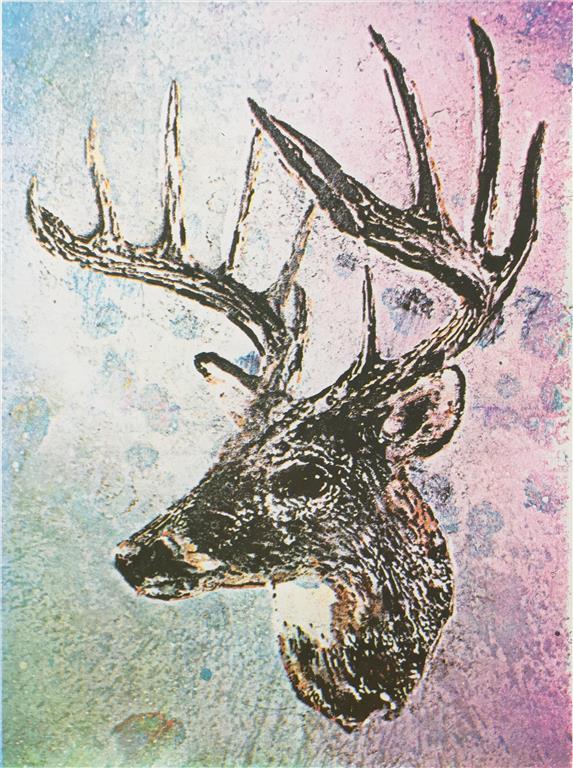 Hjort Serigrafi (38x28 cm) kr 2500 ur