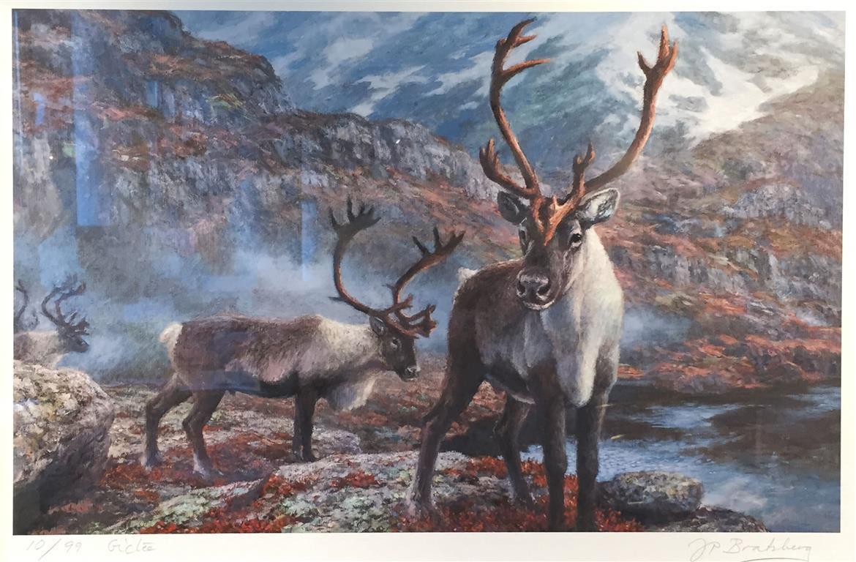 Reinsdyr i hostfjellet Giclee-trykk 31x50 cm 3500 mr
