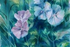 Malva II Akvarell 52,5x37 cm 2500 ur