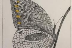 Den ene alene (gul variant) Koldnål håndkolorert (24x18 cm) kr 1600 ur