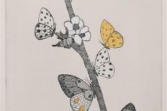 Sommerfugler Etsning håndkolorert (32x22 cm) kr 2000 ur