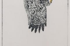 Ugle Koldnål håndkolorert (12x9 cm) kr 700 ur