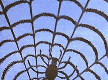 Spindelnat Tresnitt 35x16 cm 1000,-kr u.r.