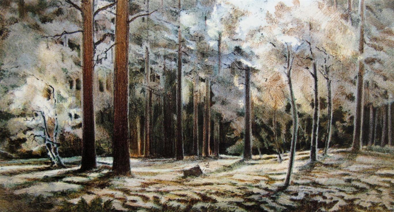 Skoginteriør Litografi (21x40 cm) kr 2200 ur