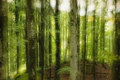Bøkeskog på Lista Digitalprint på lerret (65x100 cm) kr 6100 ur
